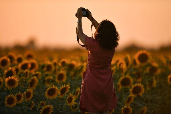 Девушка во время цветения подсолнечника на поле в Симферопольском районе. - Sputnik Беларусь