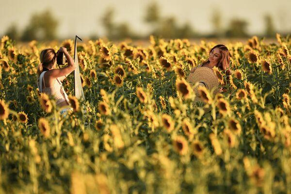 В Россию подсолнечник попал при Петре I, который, увидев диковинный заморский цветок в Голландии, распорядился послать его семена в Россию.  - Sputnik Беларусь