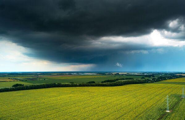 Подсолнечник — одно из самых востребованных растений среди масличных культур.  - Sputnik Беларусь