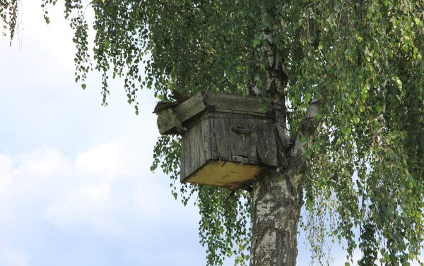 Борти для пчел на деревьях – примета многих сел на Полесье - Sputnik Беларусь