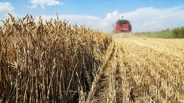 Уборка пшеницы  - Sputnik Беларусь