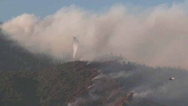 Первый крупный пожар в Калифорнии в этом году сняли  на видео - Sputnik Беларусь