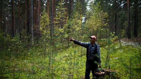 Грибник в лесу - Sputnik Беларусь