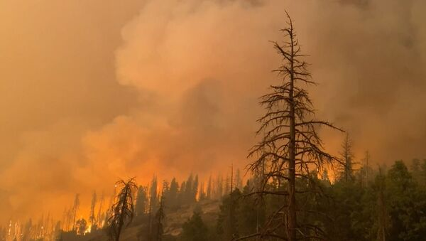Пожары в Калифорнии: более 200 человек эвакуировали из палаточного лагеря - Sputnik Беларусь
