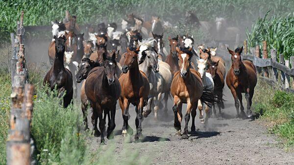 Лошади на конеферме в ОАО Полесская нива - Sputnik Беларусь
