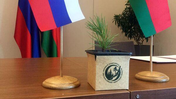 Губернатор Иркутска подарил белорусскому Бресту саженцы кедров  - Sputnik Беларусь