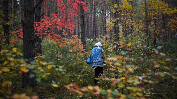 Грибник в лесу, архивное фото - Sputnik Беларусь