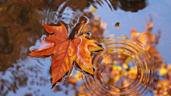 Кленовый лист в луже - Sputnik Беларусь