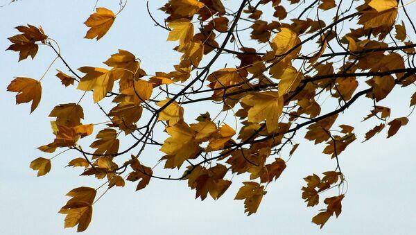 Желтые листья - Sputnik Беларусь