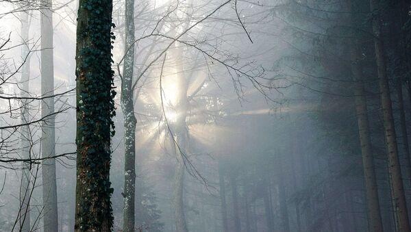 Туман у лесе - Sputnik Беларусь