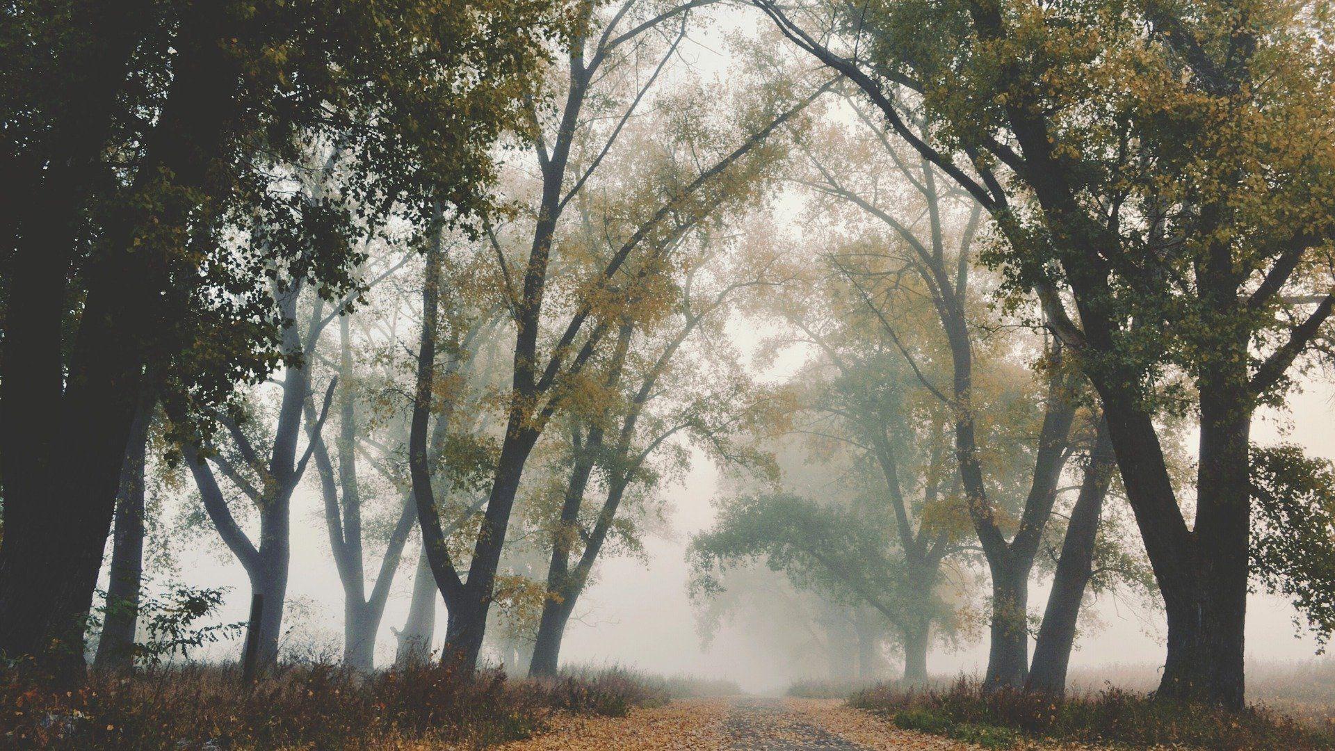 Туман осенью - Sputnik Беларусь, 1920, 22.09.2021