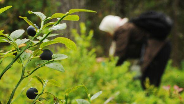 Пожилая женщина собирает чернику в лесу - Sputnik Беларусь