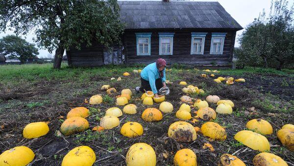 Восень на Палессі - Sputnik Беларусь