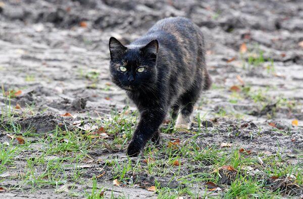 Рыбные места привлекают котов со всей округи. - Sputnik Беларусь