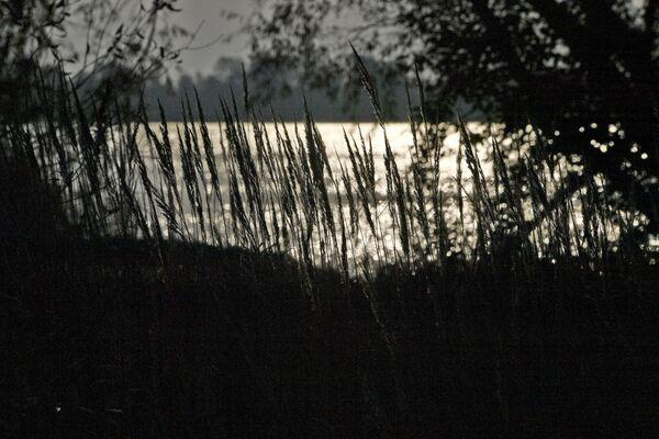Рыбхоз был создан в 1979 году, для чего пришлось выпрямить русло реки Ясельда и затопить земли, непригодные для ведения сельского хозяйства. - Sputnik Беларусь