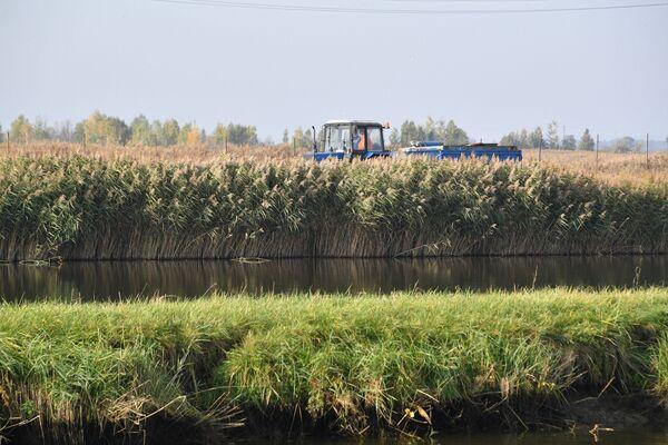 Сейчас рыбхоз – это сложная система водоемов и каналов, общая водная гладь которых превышает 2 тысячи гектаров. - Sputnik Беларусь