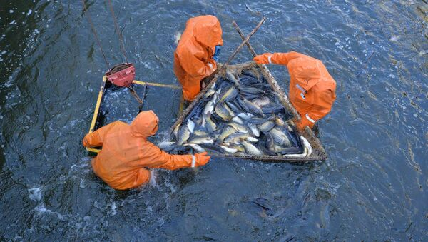 Опытный рыбхоз Селец - Sputnik Беларусь