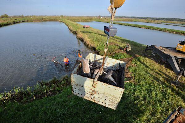 В рыбхозе нет цеха переработки икры, поэтому осетры отправляются заказчикам в самой республике и на экспорт в Россию. - Sputnik Беларусь