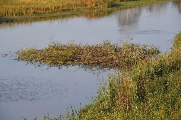 Приходится сражаться и с бобрами, которые строят плотины в каналах. - Sputnik Беларусь