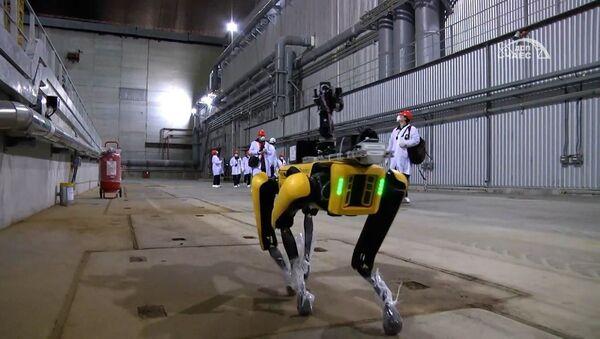 Робат-сабака вынюхвае радыяцыю на Чарнобыльскай АЭС - відэа - Sputnik Беларусь