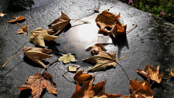 Осенние листья, архивное фото - Sputnik Беларусь