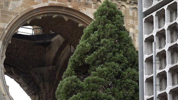Рождественскую ель уже установили в Берлине – видео - Sputnik Беларусь