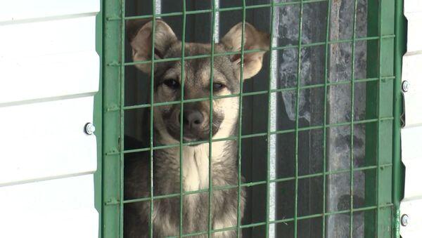 Пост в Instagram спас приют для животных, видео - Sputnik Беларусь