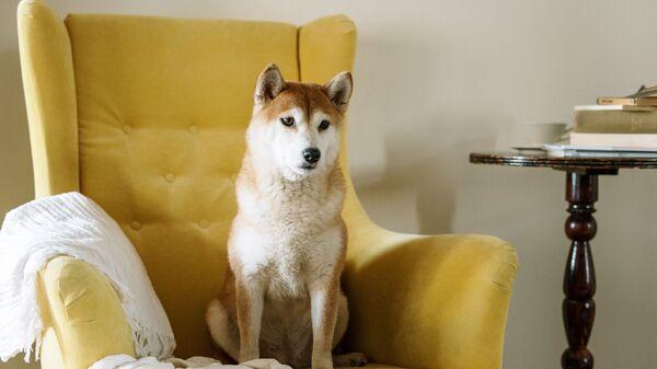 Собака на кресле - Sputnik Беларусь