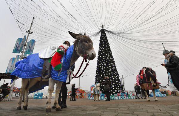 Катание на осликах и новогодняя елка на Немиге в Минске - Sputnik Беларусь