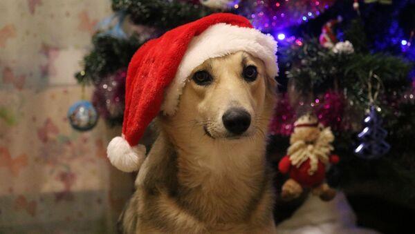 Собака возле новогодней елки - Sputnik Беларусь