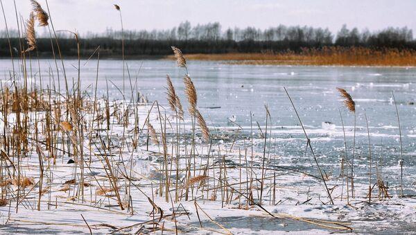 Лед и камыш на реке - Sputnik Беларусь