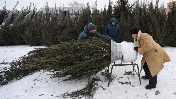 Продавец упаковывает купленную елку - Sputnik Беларусь