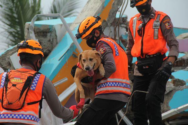 Индонезийские полицейские с собакой-ищейкой осматривают разрушенное здание больницы после землетрясения - Sputnik Беларусь