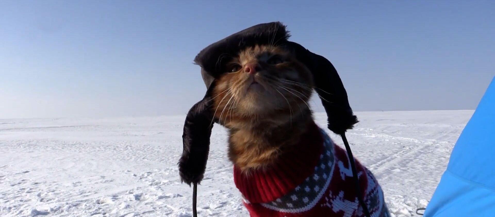 Кот суправаджае гаспадара на рыбалцы і сочыць за паплаўком - відэа - Sputnik Беларусь, 1920, 01.02.2021