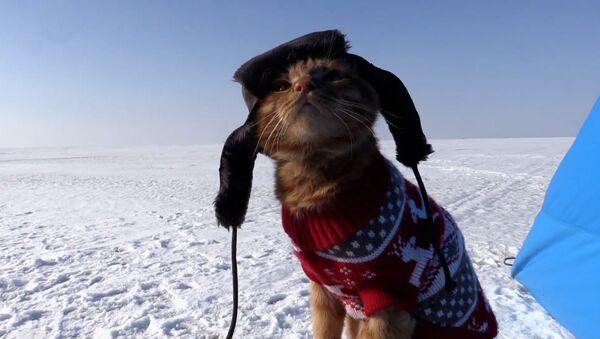 Кот суправаджае гаспадара на рыбалцы і сочыць за паплаўком - відэа - Sputnik Беларусь