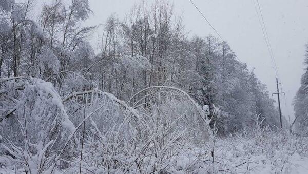 Прасека ЛЭП узімку - Sputnik Беларусь