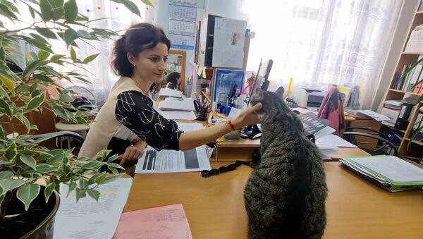 Кіпіш на пасяджэнні: кот з незвычайнай мянушкай працуе чыноўнікам - відэа - Sputnik Беларусь