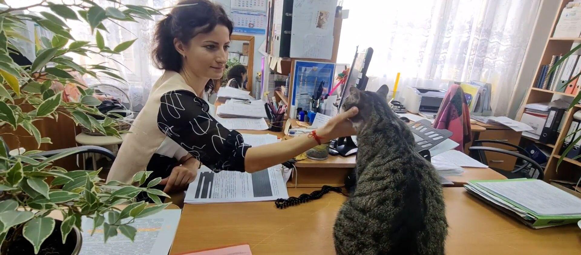 Кіпіш на пасяджэнні: кот з незвычайнай мянушкай працуе чыноўнікам - відэа - Sputnik Беларусь, 1920, 18.03.2021