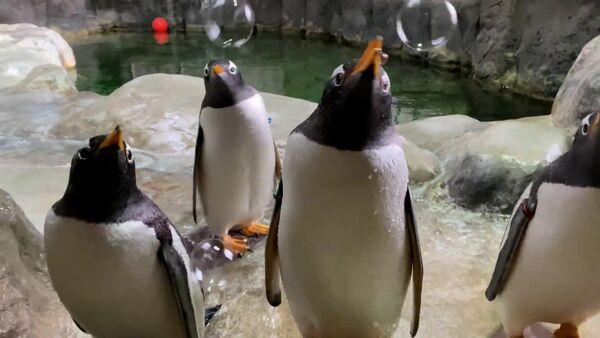 Пінгвінам у заапарку наладзілі пенную вечарыну - відэа - Sputnik Беларусь