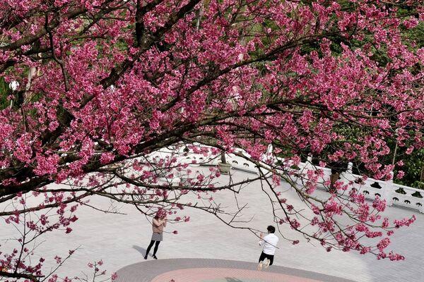 Наведвальнікі фатаграфуюцца пад квітнеючым дрэвам у храме Цянь-Юань у Новым Тайбэі напярэдадні Свята Вясны - Sputnik Беларусь