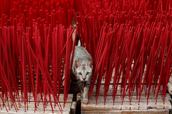 Кошка сярод араматычных палачак на хатняй фабрыцы на ўскраіне Джакарты, Інданезія - Sputnik Беларусь