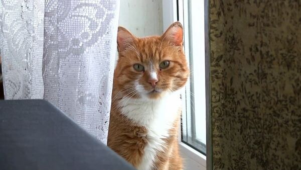 Зооволонтер продала квартиру и купила ветхий дом ради помощи кошкам (видео) - Sputnik Беларусь