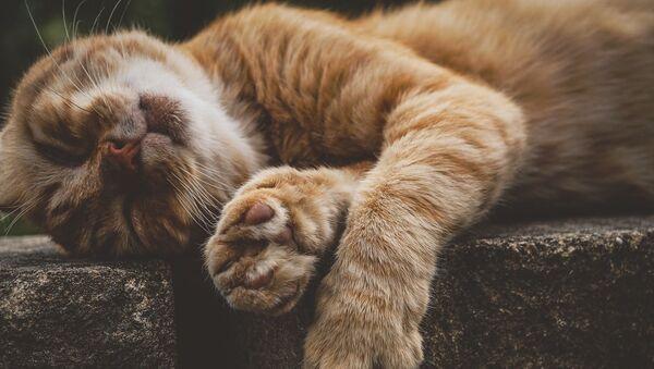 Кошка, архивное фото - Sputnik Беларусь