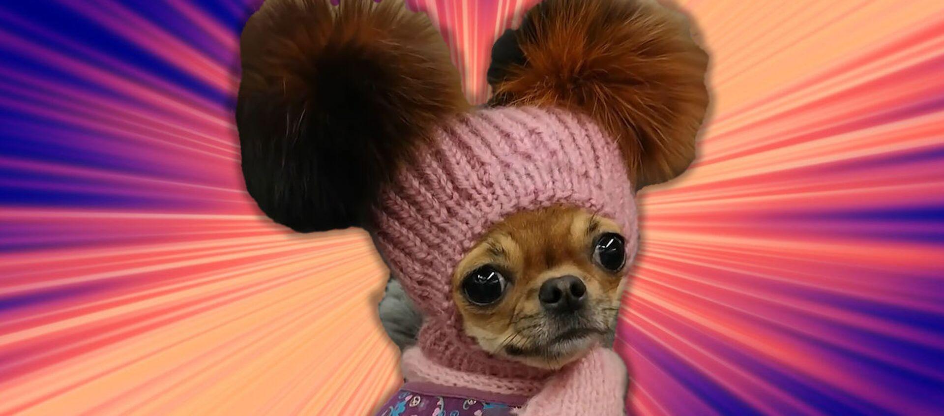 Валенки и шапочки для собак: сибирячка  утепляет четвероногих друзей - видео - Sputnik Беларусь, 1920, 21.02.2021