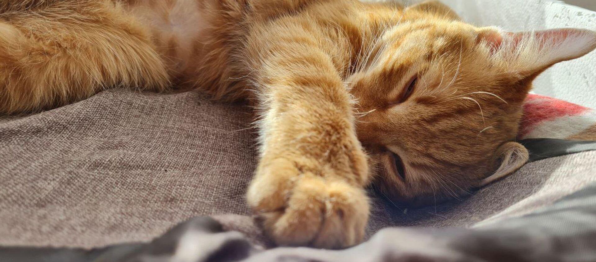 Как живет кот, ставший жертвой жестокой игры ребенка – видео - Sputnik Беларусь, 1920, 27.02.2021