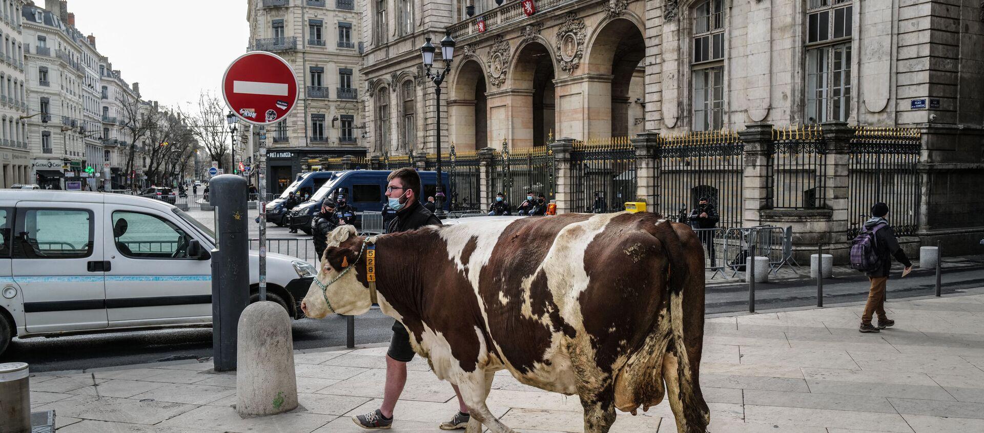 Фермер выгуливает корову на площади перед мэрией Лиона во время демонстрации протеста против решения исключить мясо из меню городских школ - Sputnik Беларусь, 1920, 10.03.2021