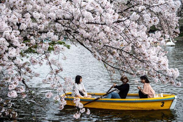 Людзі катаюцца на лодцы, гледзячы на квітнеючыя сакуры, у парку Інакасіра ў Токіа - Sputnik Беларусь