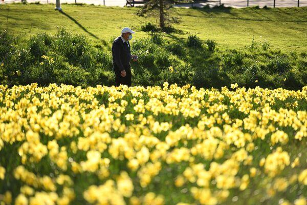Мужчына ў масцы прагульваецца ўздоўж клумбы нарцысаў ў парку Сефтон ў Ліверпулі - Sputnik Беларусь