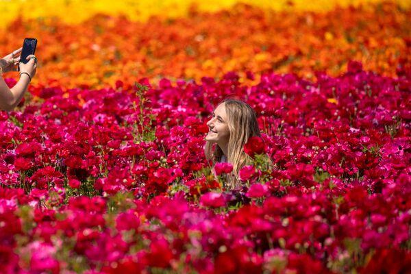 Посетители фотографируются на поле лютиков в Калифорнии  - Sputnik Беларусь