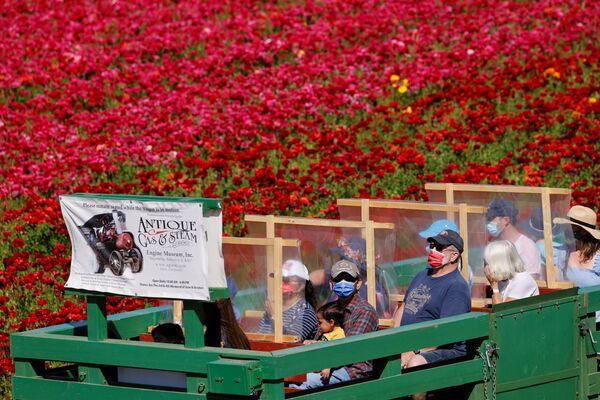 Люди на поле лютиков в Калифорнии  - Sputnik Беларусь